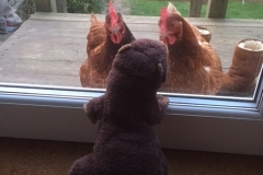 Boris Playing Chicken