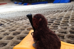 Horace and the 43rd go Tobogganing
