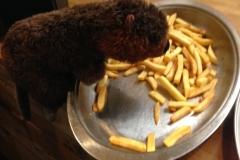 Horace loves chips!
