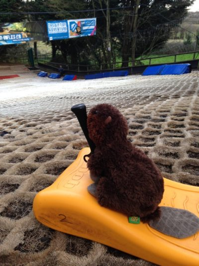 Beavers Go Tobogganing…